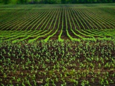 corn-fields_1426-1407